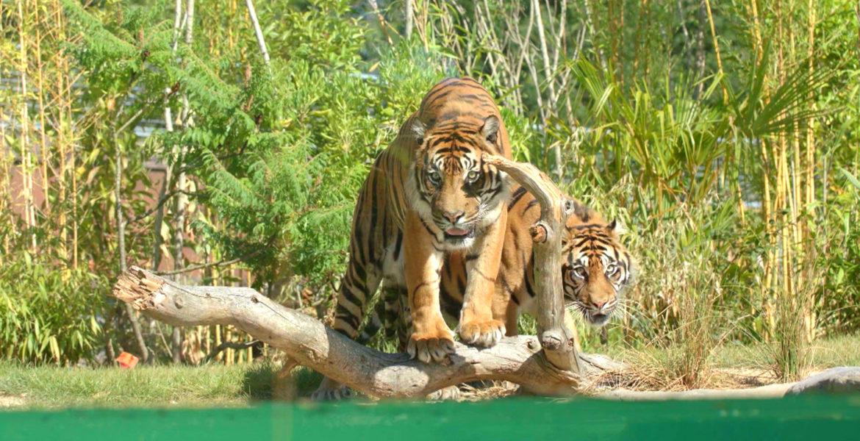"""Audience 21 juillet 19 """"Capital Plus naturels, plus extraordinaires : les nouveaux zoos stars de l'été"""" M6"""