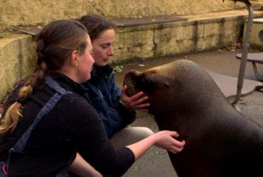 100 jours avec les animaux du Pal, le plus grand zoo d'Auvergne