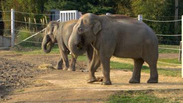 """3 avr. 20 – C8 """"100 jours avec les animaux du Pal : le plus grand zoo d'Auvergne"""" à 21h15"""