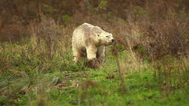"""27 mars 20 – C8 """"100 jours avec les animaux du Cerza, le plus grand zoo de Normandie"""" à 21h15"""