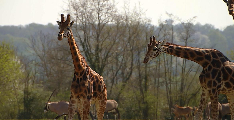 """10 oct. 20 – C8 """"100 jours avec les animaux du Pal, le plus grand zoo d'Auvergne"""" INÉDIT à 21h05"""