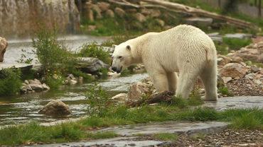 """3 oct. 20 – C8 """"100 jours avec les animaux de Cerza, le plus grand zoo de Normandie"""" INÉDIT à 21h05"""